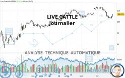LIVE CATTLE - Journalier