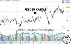 FEEDER CATTLE - 1H