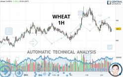 WHEAT - 1H