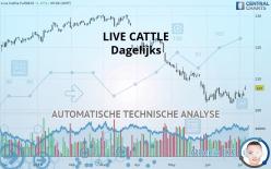 LIVE CATTLE - Dagelijks